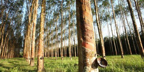 industri karet indonesia